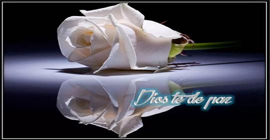 Frases de luto con rosas blancas