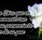 Frases de luto con imágenes lindas de luto para compartir
