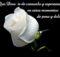 Frases de luto para compartir por un amigo